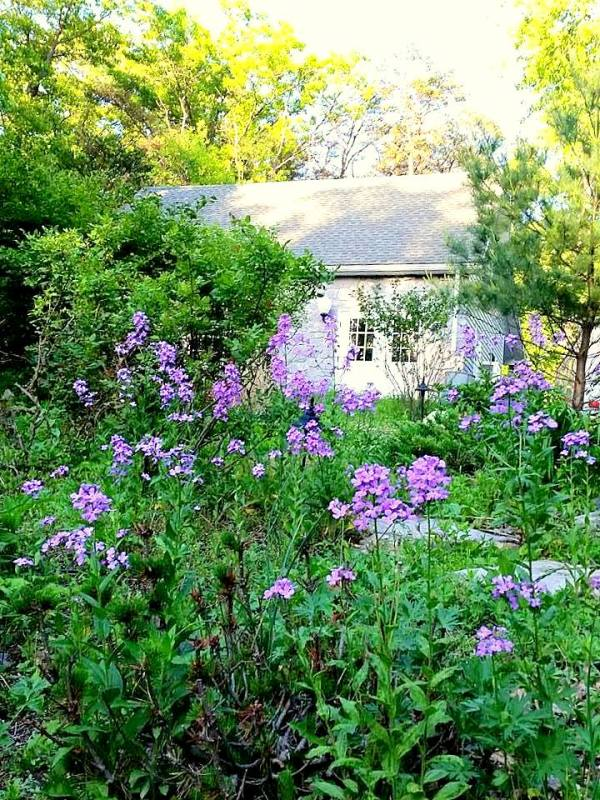 flowers and cottage