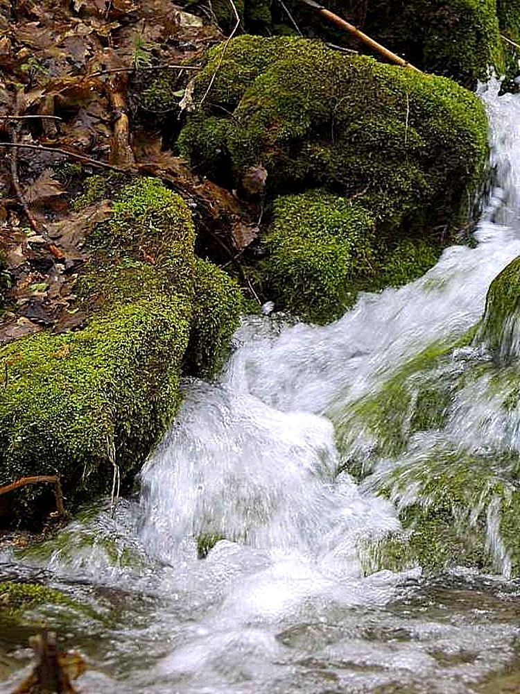 streams_brooks_water_moss_leaves